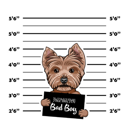 Yorkshire terrier Criminal. Police banner. Arrest photo. Police placard, Police mugshot, lineup. Police department banner. Dog offender. Vector illustration Stock Illustratie