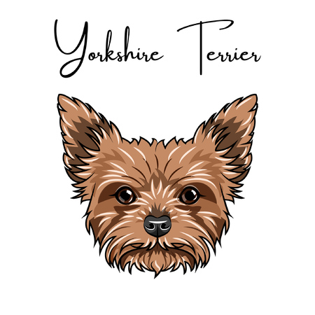 Yorkshire terrier portrait vector illustration  イラスト・ベクター素材