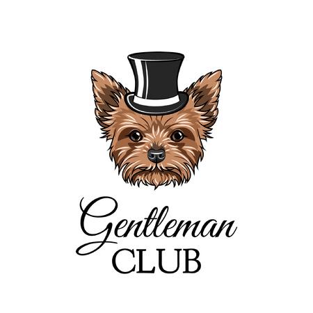Yorkshire terrier gentleman. Top hat. Gentleman club text. Vector illustration