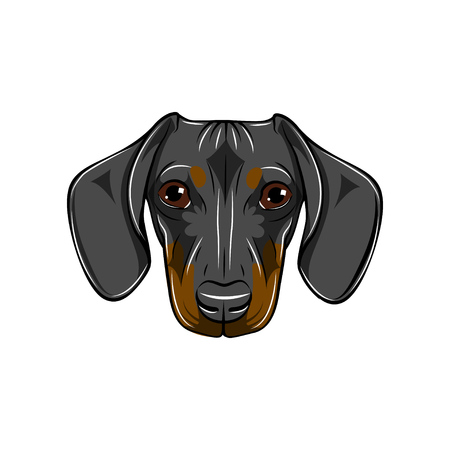 Dachshund portrait vector illustration. Banque d'images - 100590484