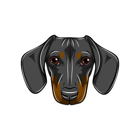 Dachshund portrait vector illustration. Illustration