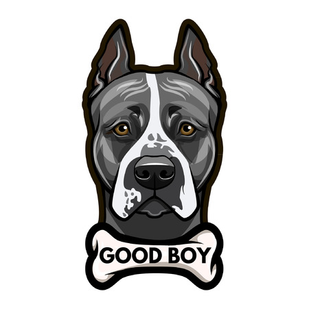 Staffordshire Terrier dog portrait. Bone. Good boy lettering. Vector illustration.