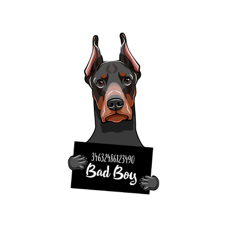 Doberman Prison. Police banner. Arrest photo. Police placard, Police mugshot, lineup. Dog criminal. Police department banner. Dog offender. Vector illustration
