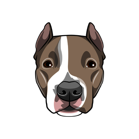 American staffordshire terrier portrait. Dog breed. Dog muzzle, head, face. Vector illustration Illustration