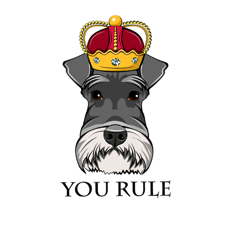Schnauzer king. Crown. Dog queen. Schnauzer portrait. You rule lettering. Vector illustration