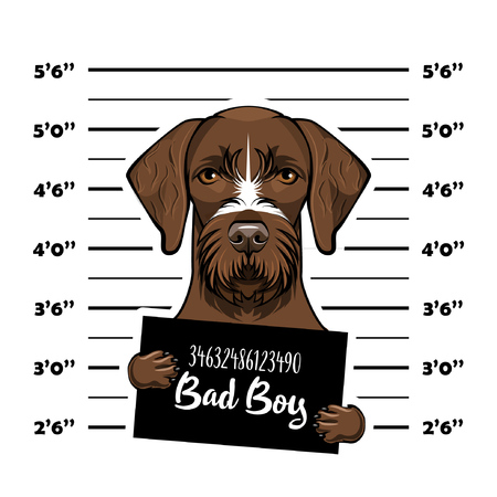 German shorthaired pointer dog criminal. Police banner. Arrest photo. Police placard, Police mugshot, lineup. Police department banner. Dog offender. Vector illustration
