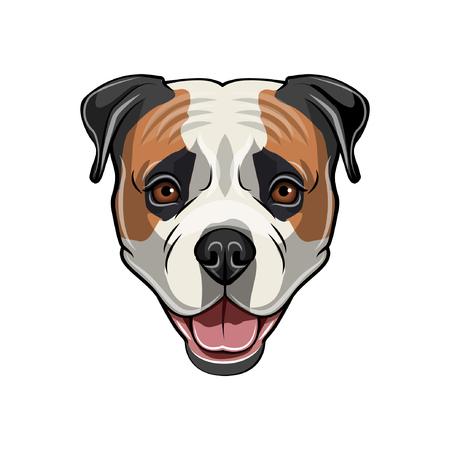 American Bulldog head. Illustration