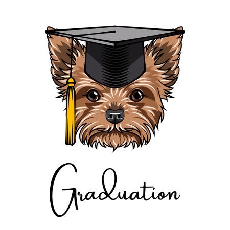 Yorkshire terrier Graduate.