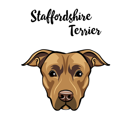 Staffordshire Terrier dog portrait. Illustration