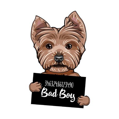 Yorkshire terrier Bad boy. Illustration