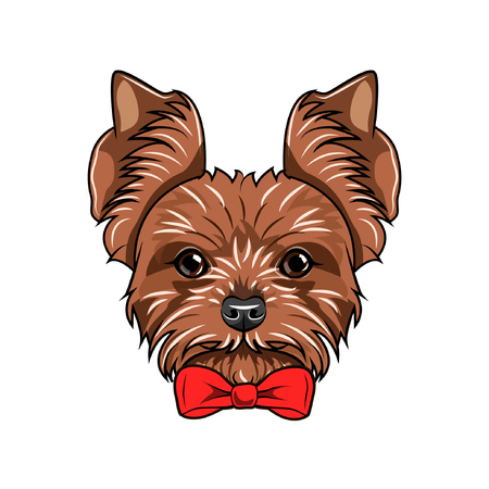Yorkshire terrier portrait.