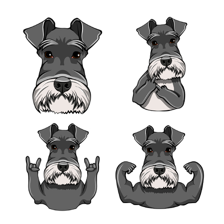 Schnauzer Dog. Rock gesture. Schnauzer set vector illustration.