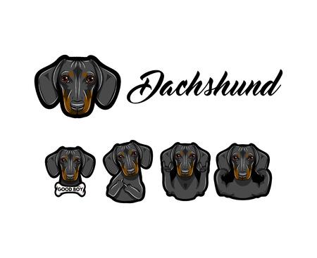 Dachshund dog. Dachshund with different gestures set. Illustration