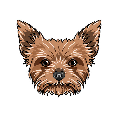 Yorkshire terrier dog portrait. Dog face, head, muzzle. Yorkshire terrier breed. Vector illustration.