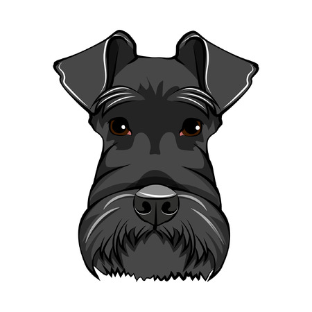 Schnauzer dog face. Schnauzer portrait. Dog head. Schnauzer dog breed. Vector illustration.