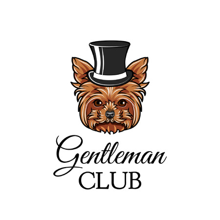Yorkshire terrier dog gentleman. Top hat. Gentleman club text. Yorkshire terrier breed. Dog portrait. Vector illustration.