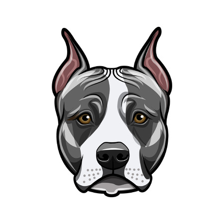 American staffordshire terrier head face. Dog portrait. Staffordshire terrier breed. Vector illustration.