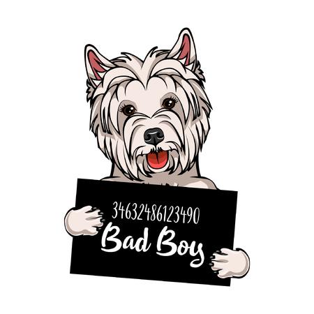 West Highland White Terrier mugshot Standard-Bild - 100966980