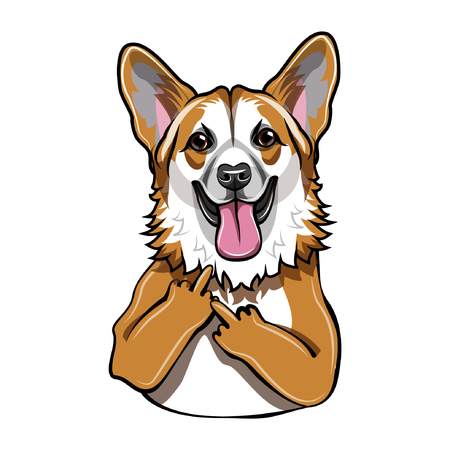 Welsh corgi dog. Middle finger gesture.