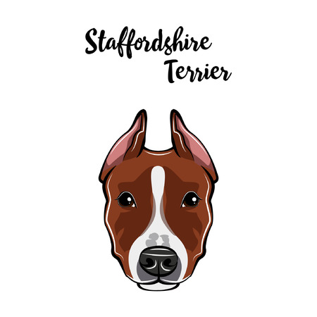 Staffordshire Terrier face. Dog head muzzle. Staffordshire terrier dog breed. Vector illustration. Illustration