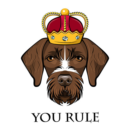 Dog German Shorthaired Pointer portrait. Crown. Dog king. You rule lettering. Cute animal. Vector illustration