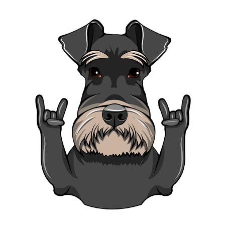 Retrato de perro Schnauzer. Cuernos, gesto de Rock. Raza Schnauzer. Ilustración de vector.