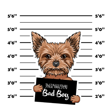 Yorkshire Terrier dog Bad boy. Dog prison. Police mugshot background. Yorkshire terrier criminal. Arrested dog. Vector illustration. Illustration