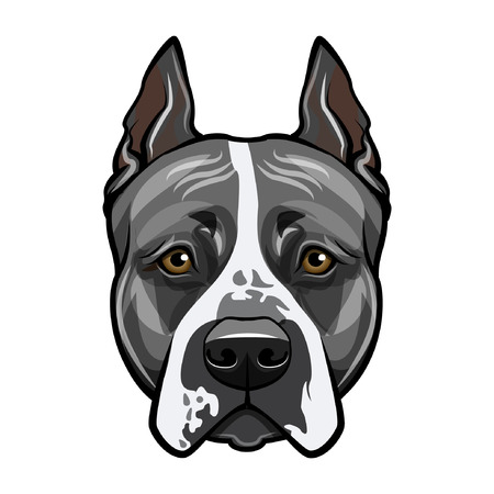 American staffordshire terrier head face. Dog portrait. Vector illustration. Çizim