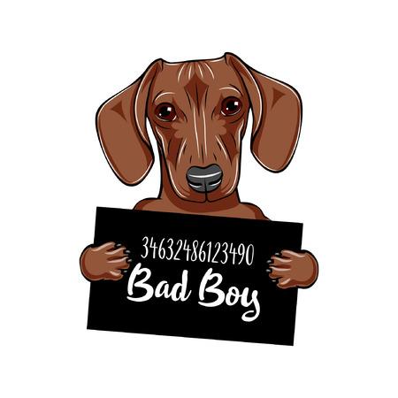 Dachshund dog Dog prison. Dachshund criminal. Arrested dog. Dachshund bad boy. Vector illustration. Stock Illustratie