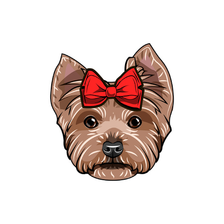 Yorkshire terrier with red bow. Yorkshire terrier dog breed. Dog portrait. Decorative red bow. Vector illustration.