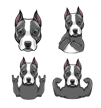 Staffordshire Terrier dog. Gestures set. Muscles, Middle finger, Head, Rock gesture, Horns. Dog portrait. Vector illustration. 스톡 콘텐츠 - 100893204