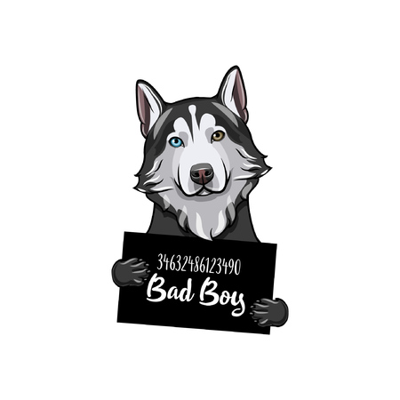 Siberian husky dog Bad boy. Dog prison. Police mugshot background. Husky criminal. Illustration