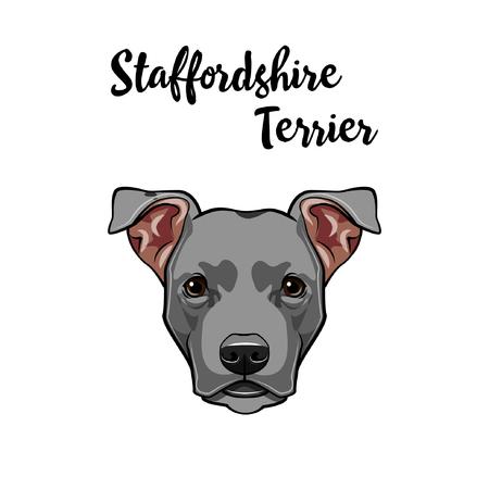 American Staffordshire Terrier portrait. Dog face, head, muzzle. Cute pet. Vector illustration.