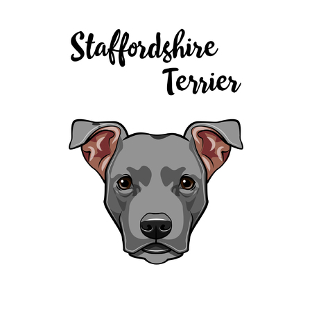 American Staffordshire Terrier portrait. Dog face, head, muzzle. Cute pet. Vector illustration.