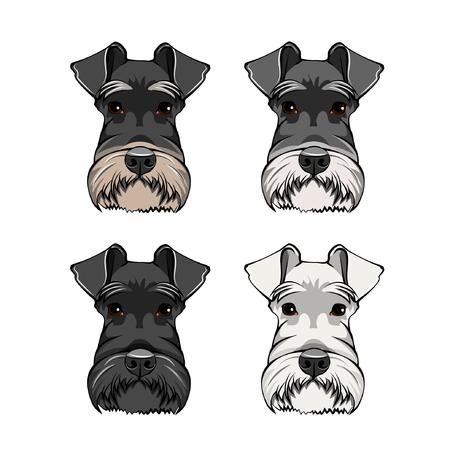 Schnauzer Dog Portraits set. Schnauzer dog breed. Dog head, muzzle, face. Vector illustration.