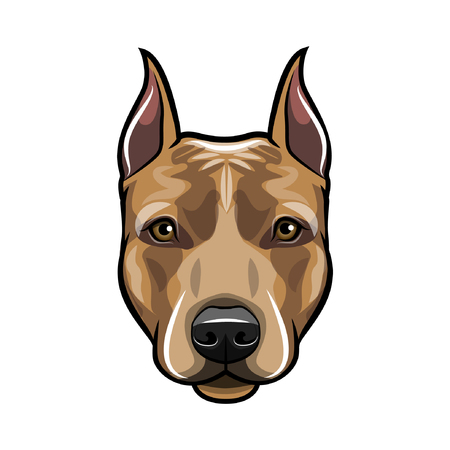 Staffordshire Terrier dog head. Dog portrait. Staffordshire terrier muzzle, face. Dog breed. Vector illustration.
