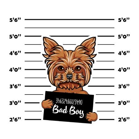 Dog Yorkshire terrier Prisoner, convict. Bad doy. Dog criminal. Police placard, Police mugshot, lineup. Arrest photo. Mugshot photo. Vector illustration.
