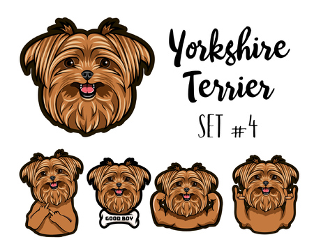 Yorkshire terrier dog. Rock gesture, Middle finger, Muscles, Horns. Dog head, muzzle, face. Cute pet. Yorkshire terrier breed. Vector illustration.