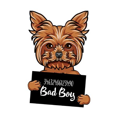 Illustration vectorielle de Yorkshire Terrier chien mauvais garçon.