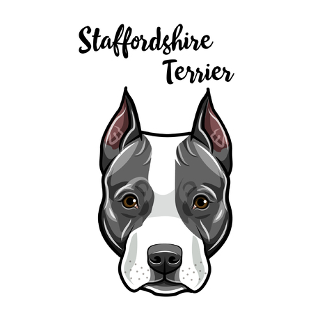 American Staffordshire Terrier face. Dog breed portrait. Staffordshire Terrier head, muzzle. Cute pet. Vector illustration. Çizim