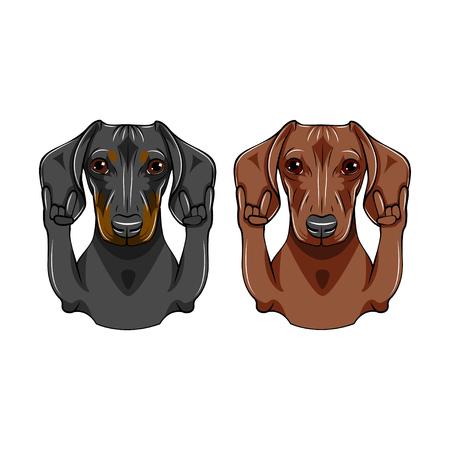 Dachshund dog set. Rock gesture, Horns. Pet portrait. Vector illustration.