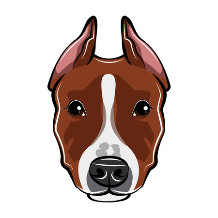 Staffordshire Terrier dog portrait. Dog head, face, muzzle. Staffordshire Terrier breed. Vector illustration.