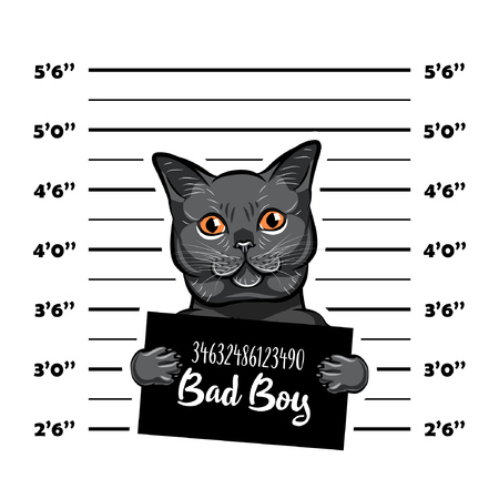 Gray cat bad boy. Cat criminal. Arrest photo. Police records. Cat prison. Police mugshot background. Vector illustration.