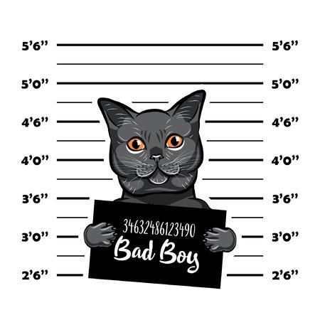 Gray cat bad boy. Cat criminal. Arrest photo. Police records. Cat prison. Police mugshot background. Vector illustration.