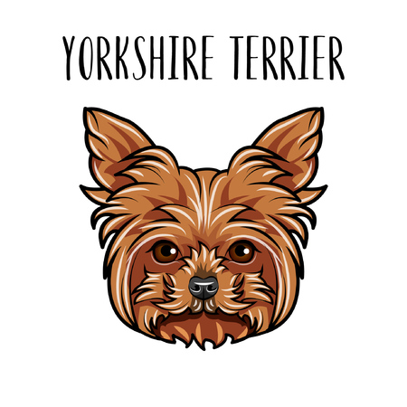 Yorkshire terrier dog portrait. Dog head. Yorkshire terrier breed. Cute dog. Vector illustration.