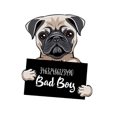 Prisionero de Pug. Perro pug chico malo. Perro criminal. Perro detenido.