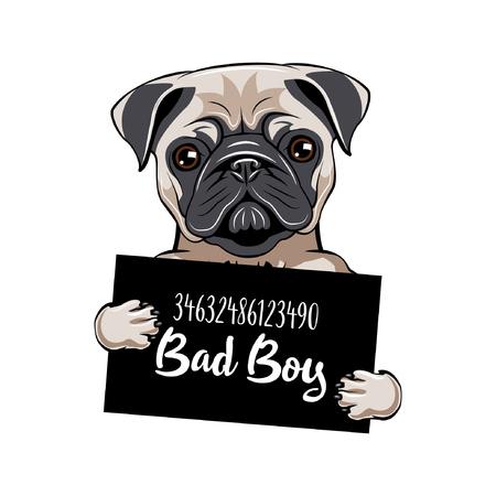 Pug gevangene. Mopshond Stoute jongen. Hondencrimineel. Gearresteerde hond.