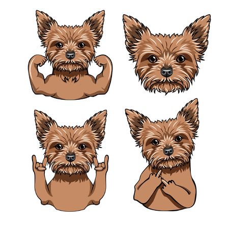 Yorkshire terrier set. Muscles, Rock gesture, Horns, Middle finger. Face, Muzzle, Head. Yorkshire terrier portrait. Dog breed. Vector illustration.