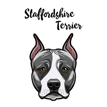 Staffordshire Terrier haed. Dog portrait. Staffordshire terrier face, muzzle. Dog breed. Vector ollustration.