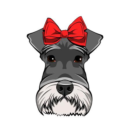 Schnauzer dog portrait. Red bow. Decorative dogs accessory. Schnauzer breed. Vector illustration.